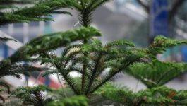 tree-17006_960_720-300x201